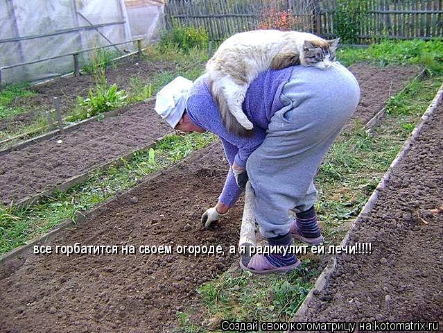 Котоматрица: все горбатится на своем огороде, а я радикулит ей лечи!!!!!