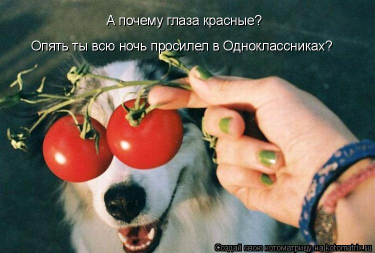 Котоматрица: А почему глаза красные?  Опять ты всю ночь просилел в Одноклассниках?