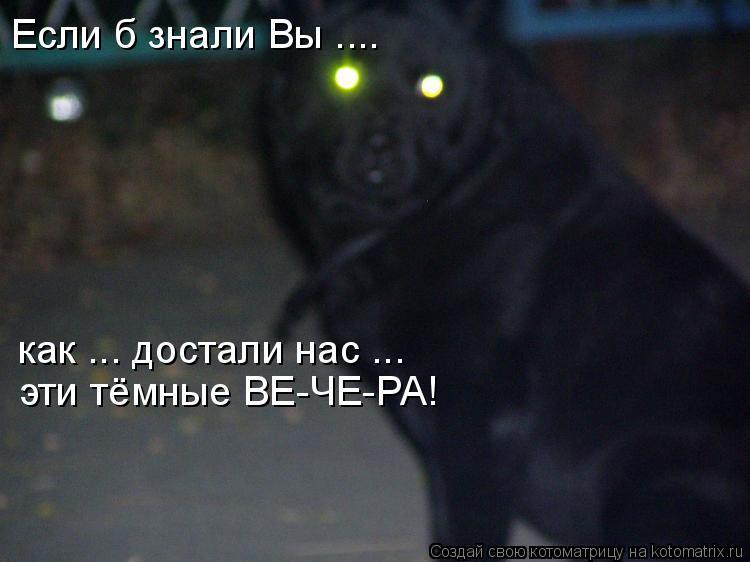 Котоматрица - Если б знали Вы .... как ... достали нас ... эти тёмные ВЕ-ЧЕ-РА!
