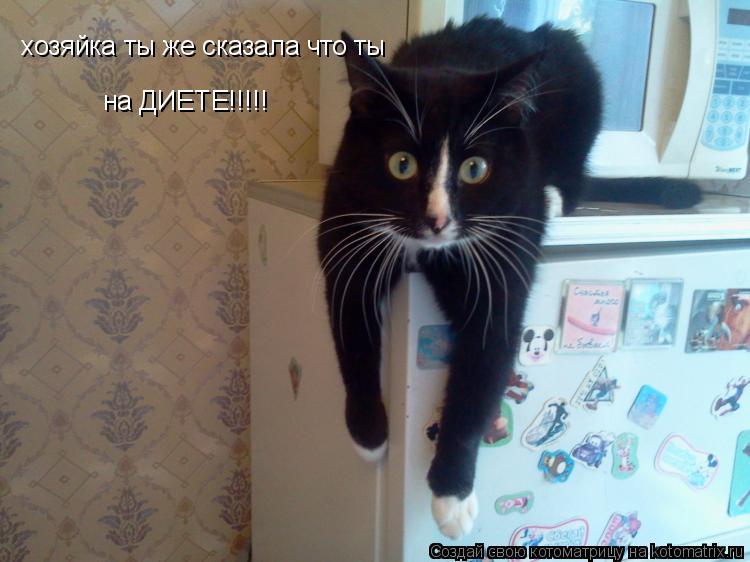 Котоматрица: хозяйка ты же сказала что ты на ДИЕТЕ!!!!!