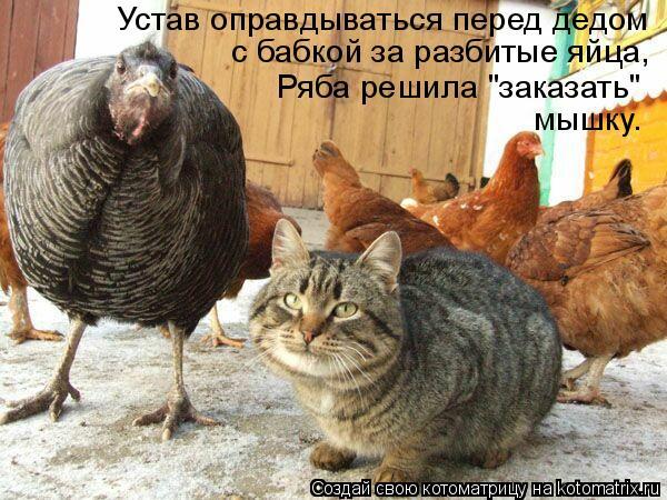 """Котоматрица: Устав оправдываться перед дедом  с бабкой за разбитые яйца,  Ряба решила """"заказать""""  мышку."""