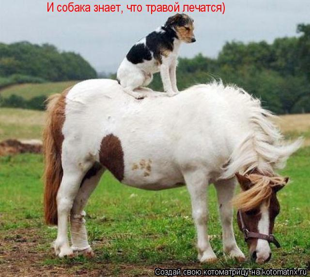 Котоматрица: И собака знает, что травой лечатся)