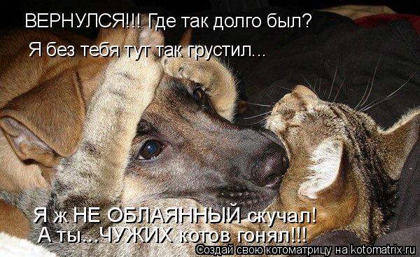 Котоматрица: ВЕРНУЛСЯ!!! Где так долго был? Я без тебя тут так грустил... Я ж НЕ ОБЛАЯННЫЙ скучал! А ты...ЧУЖИХ котов гонял!!!