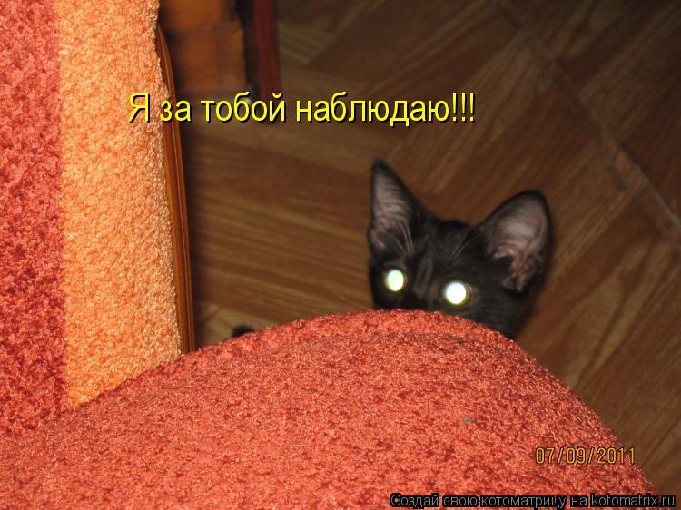 Котоматрица: Я за тобой наблюдаю!!!