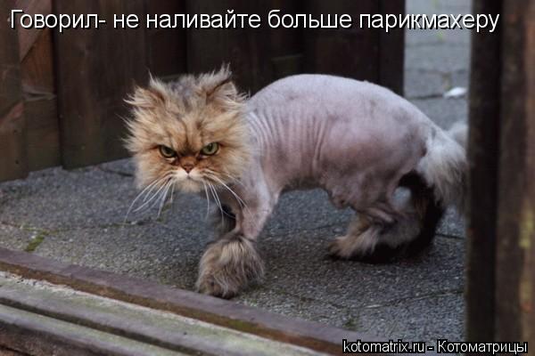 Котоматрица: Говорил- не наливайте больше парикмахеру