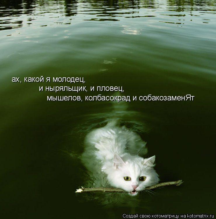 Котоматрица: ах, какой я молодец, и ныряльщик, и пловец,  мышелов, колбасокрад и собакозаменЯт