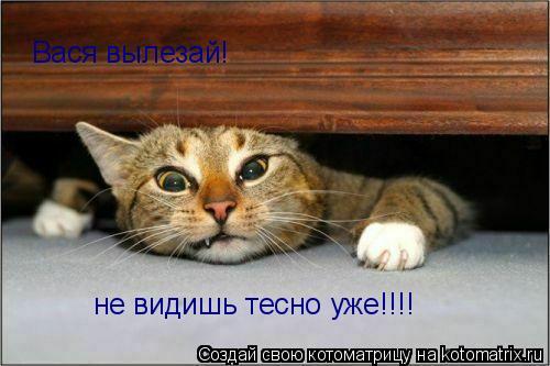 Котоматрица: Вася вылезай! не видишь тесно уже!!!!