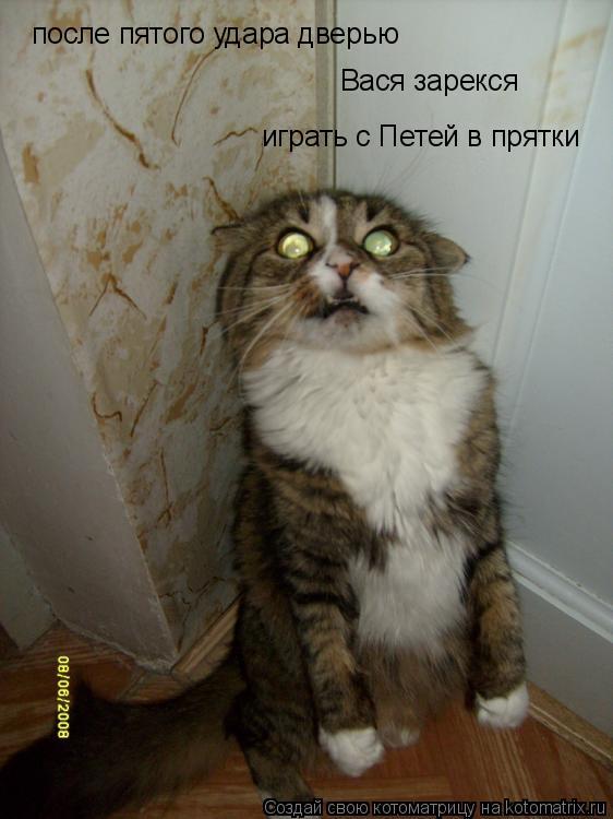 Котоматрица: после пятого удара дверью Вася зарекся играть с Петей в прятки