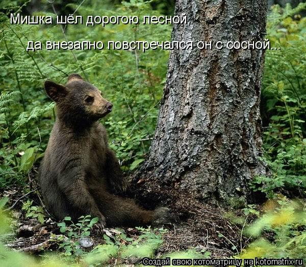 Котоматрица: Мишка шёл дорогою лесной, да внезапно повстречался он с сосной...