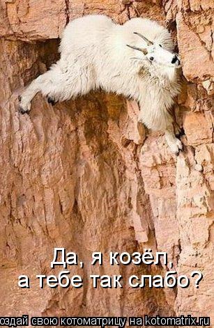 Котоматрица: Да, я козёл,  а тебе так слабо?