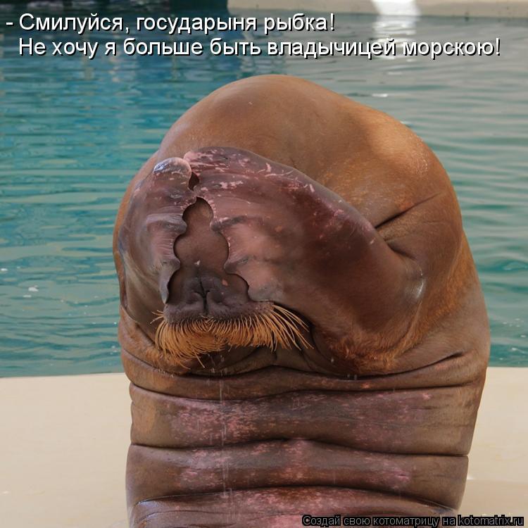 Котоматрица - - Смилуйся, государыня рыбка! Не хочу я больше быть владычицей морскою