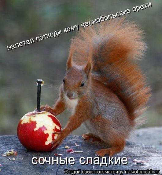 Котоматрица: налетай потходи кому чернобольские орехи сочные сладкие