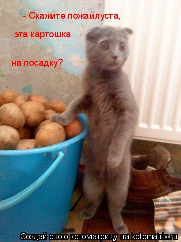 Котоматрица: - Скажите пожайлуста,  эта картошка  на посадку?