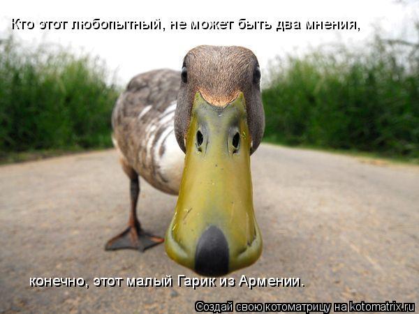 Котоматрица: Кто этот любопытный, не может быть два мнения, конечно, этот малый Гарик из Армении. конечно, этот малый Гарик из Армении.