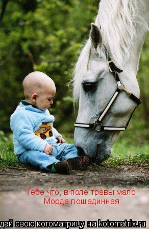 Котоматрица: Тебе что, в поле травы мало Морда лошадинная