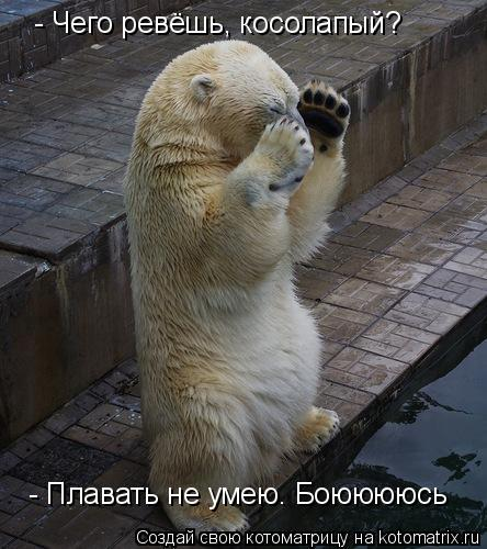 Котоматрица: - Чего ревёшь, косолапый? - Плавать не умею. Боююююсь