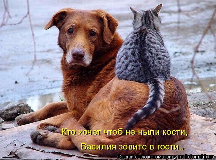 Котоматрица: Кто хочет чтоб не ныли кости, Василия зовите в гости...