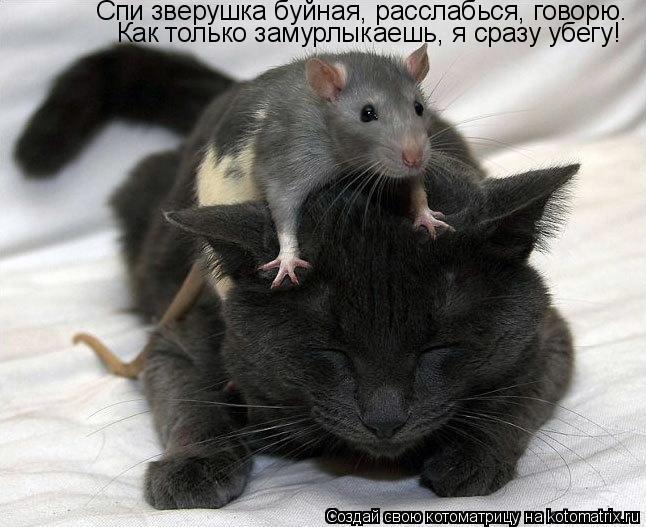 Котоматрица: Спи зверушка буйная, расслабься, говорю. Как только замурлыкаешь, я сразу убегу!