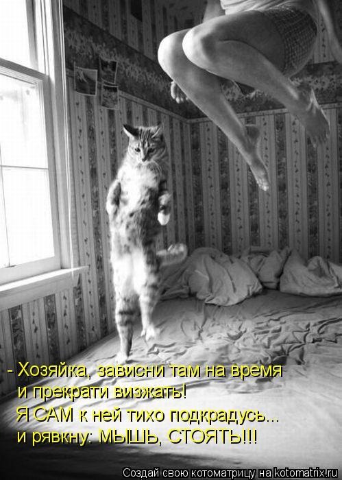 Котоматрица: - Хозяйка, зависни там на время и прекрати визжать! Я САМ к ней тихо подкрадусь... и рявкну: МЫШЬ, СТОЯТЬ!!!