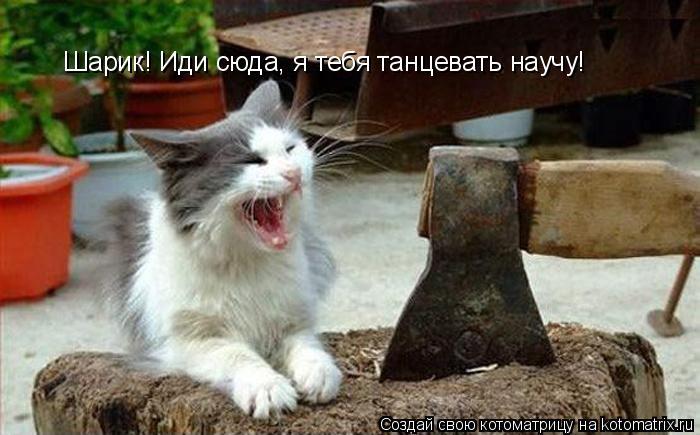 Котоматрица: Шарик! Иди сюда, я тебя танцевать научу!