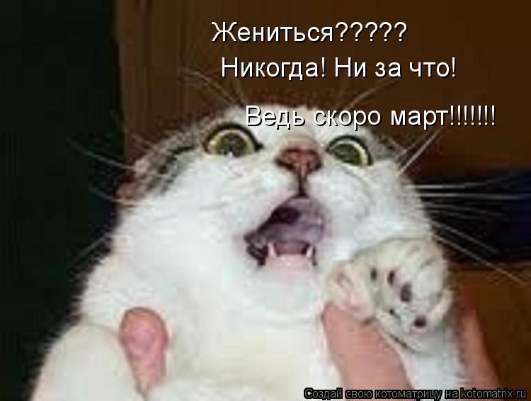 Котоматрица: Жениться????? Никогда! Ни за что! Ведь скоро март!!!!!!!