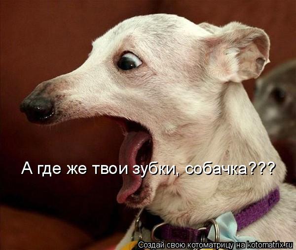Котоматрица: А где же твои зубки, собачка???