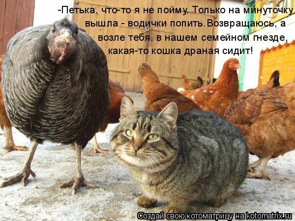 Котоматрица: -Петька, что-то я не пойму. Только на минуточку возле тебя, в нашем семейном гнезде, какая-то кошка драная сидит! вышла - водички попить.Возвра