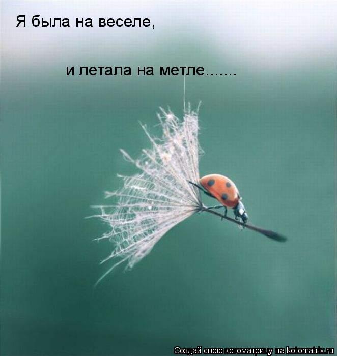 Котоматрица: Я была на веселе, и летала на метле.......