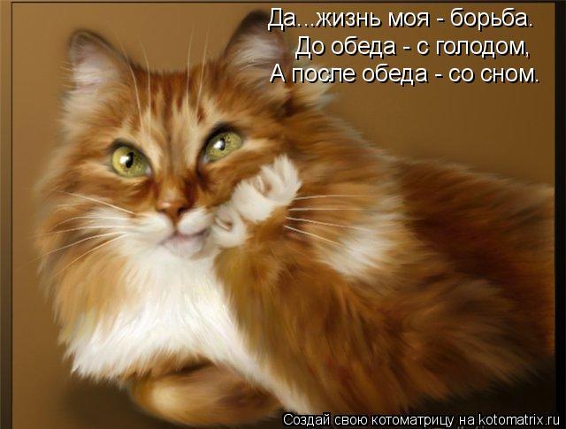 Котоматрица: Да...жизнь моя - борьба. До обеда - с голодом,  А после обеда - со сном.