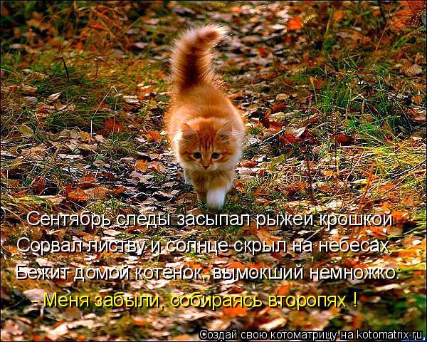 Котоматрица: Сентябрь следы засыпал рыжей крошкой Сорвал листву и солнце скрыл на небесах Бежит домой котёнок, вымокший немножко: - Меня забыли, собирая