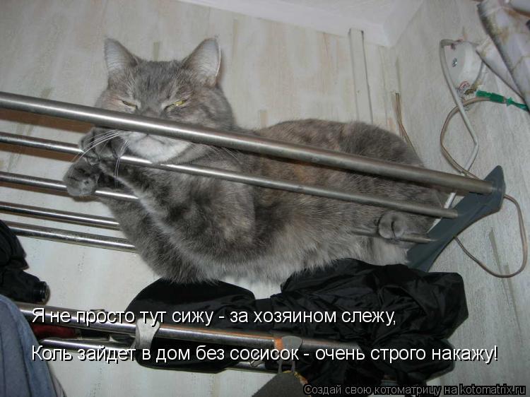 Котоматрица: Я не просто тут сижу - за хозяином слежу, Коль зайдет в дом без сосисок - очень строго накажу!