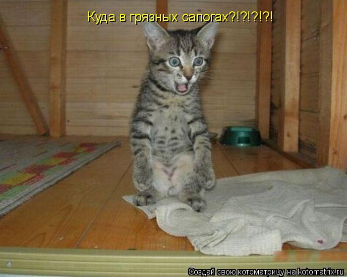 Котоматрица: Куда в грязных сапогах?!?!?!?!
