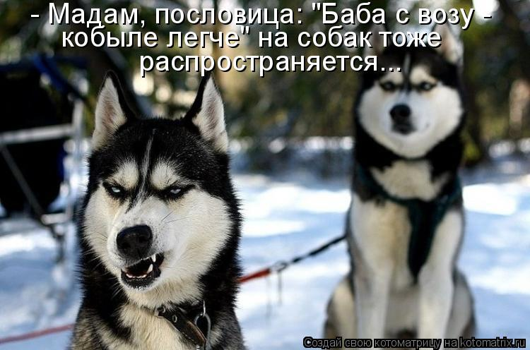 """Котоматрица - - Мадам, пословица: """"Баба с возу - кобыле легче"""" на собак тоже распрос"""