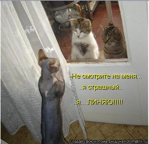 Котоматрица: -Не смотрите на меня... ..я страшный.. ..я....ЛИНЯЮ!!!!!