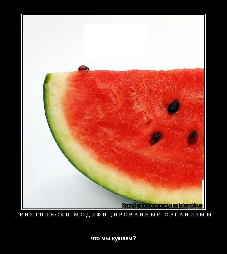 Котоматрица: Генетически модифицированные организмы что мы кушаем?
