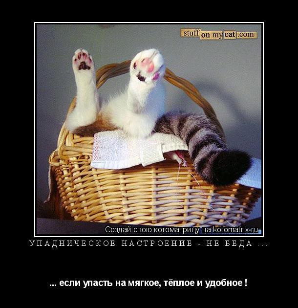Котоматрица: Упадническое настроение - не беда ... ... если упасть на мягкое, тёплое и удобное !