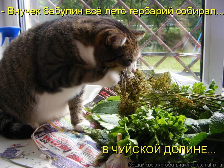 Котоматрица: - Внучек бабулин всё лето гербарий собирал... В ЧУЙСКОЙ ДОЛИНЕ...