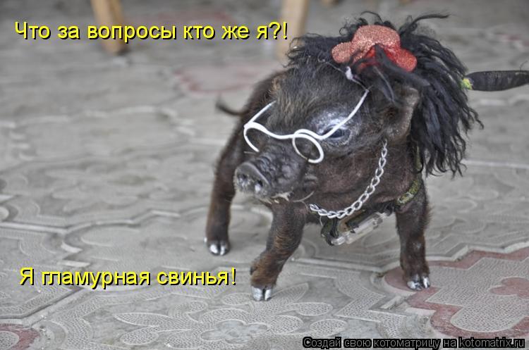 Котоматрица: Что за вопросы кто же я?! Я гламурная свинья!