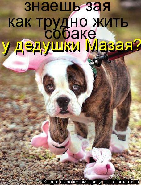 Котоматрица - знаешь зая как трудно жить собаке у дедушки Мазая у дедушки Мазая?