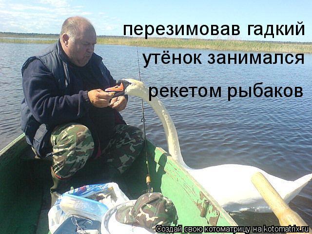 Котоматрица: перезимовав гадкий утёнок занимался рекетом рыбаков