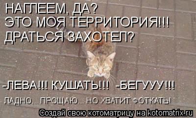 Котоматрица: НАГЛЕЕМ, ДА? ЭТО МОЯ ТЕРРИТОРИЯ!!! ДРАТЬСЯ ЗАХОТЕЛ? ЛАДНО... ПРОЩАЮ... НО ХВАТИТ ФОТКАТЬ! -ЛЕВА!!! КУШАТЬ!!!  -БЕГУУУ!!!