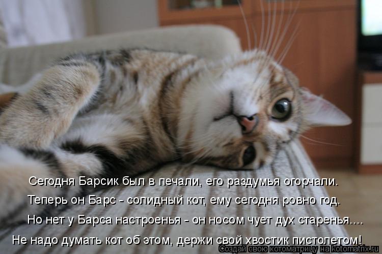 Котоматрица: Сегодня Барсик был в печали, его раздумья огорчали. Теперь он Барс - солидный кот, ему сегодня ровно год. Но нет у Барса настроенья - он носом