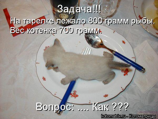 Котоматрица: Задача!!! На тарелке лежало 800 грамм рыбы. Вес котенка 700 грамм. Вопрос: .... Как ???