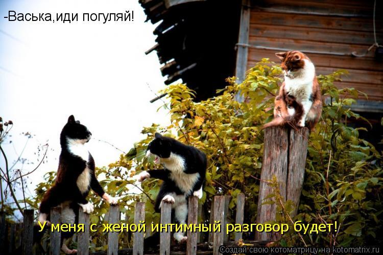 Котоматрица: -Васька,иди погуляй!  У меня с женой интимный разговор будет!