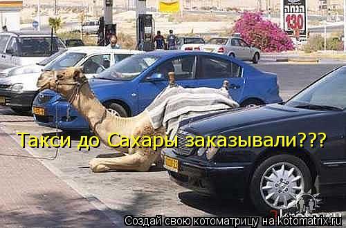 Котоматрица: Такси до Сахары заказывали???