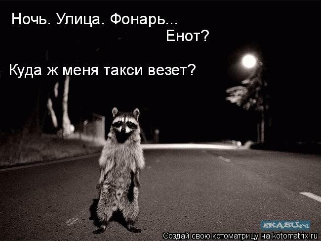 Котоматрица: Ночь. Улица. Фонарь... Енот? Куда ж меня такси везет?