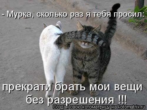 Котоматрица: - Мурка, сколько раз я тебя просил: без разрешения !!! прекрати брать мои вещи