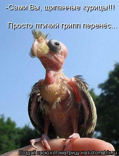 Котоматрица: -Сами Вы, щипанные курицы!!! Просто птичий грипп перенёс...