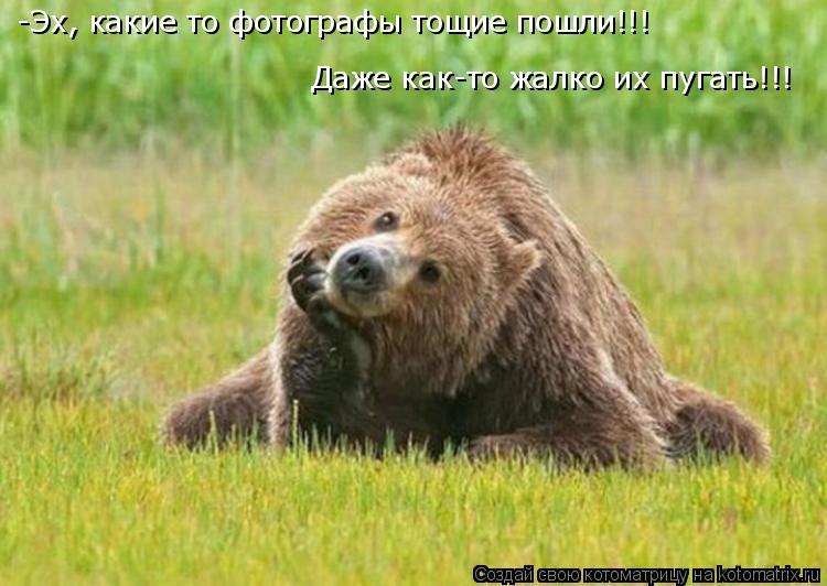 Котоматрица: -Эх, какие то фотографы тощие пошли!!! Даже как-то жалко их пугать!!!
