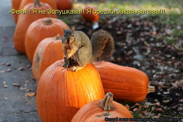 Котоматрица: -Феяя!! Я не Золушкааа!! Я орешки заказывалааа!!!